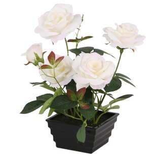 Roses Floral Arrangement in Pot