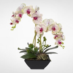Handmade Phalaenopsis Silk Orchids with Succulents Floral Arrangement in Pot