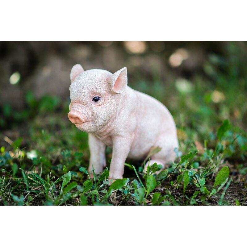Hi Line Gift Ltd Sitting Baby Pig Statue Reviews Wayfair
