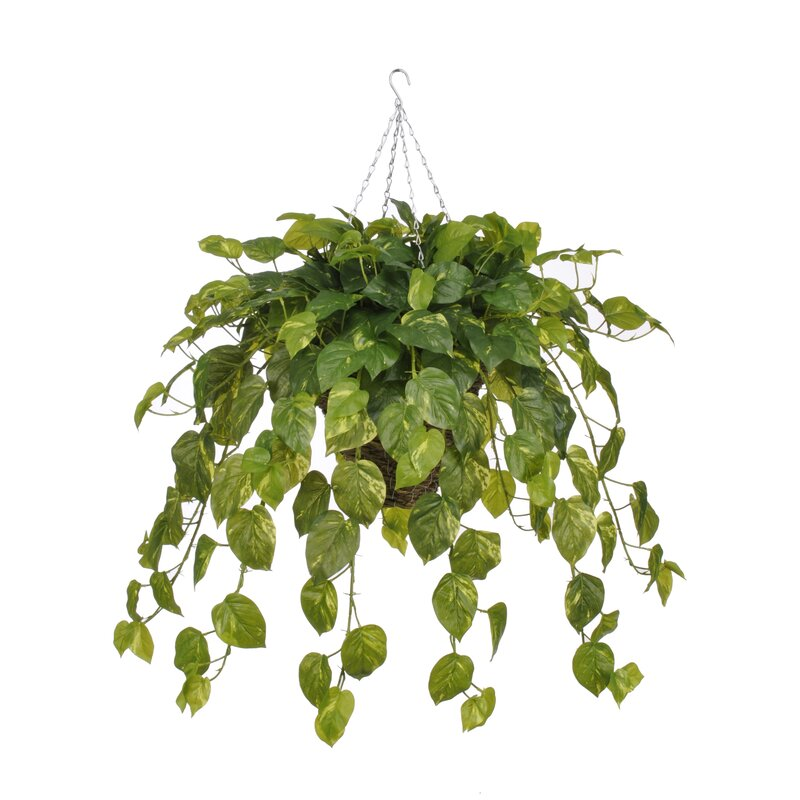 House Of Silk Flowers Artificial Real Touch Pothos Hanging Plant In Square Basket Wayfair
