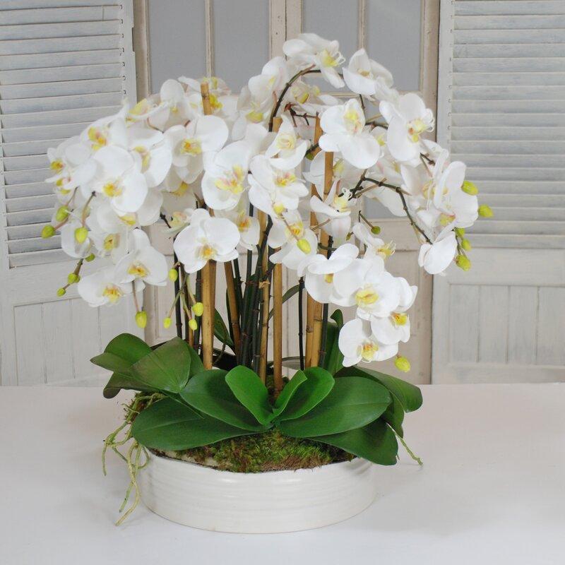 Winward Home Orchids Floral Arrangement In Pot Perigold