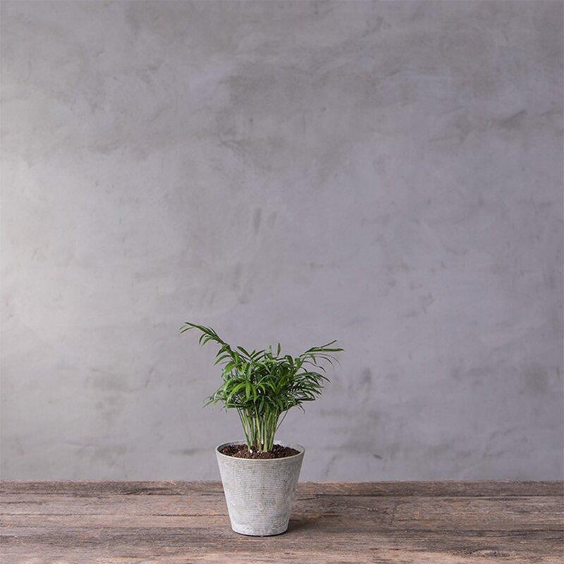 Foundry Select Carreras Self Watering Resin Pot Planter
