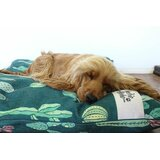 Bohannan Cactus Pet Bed Pillow