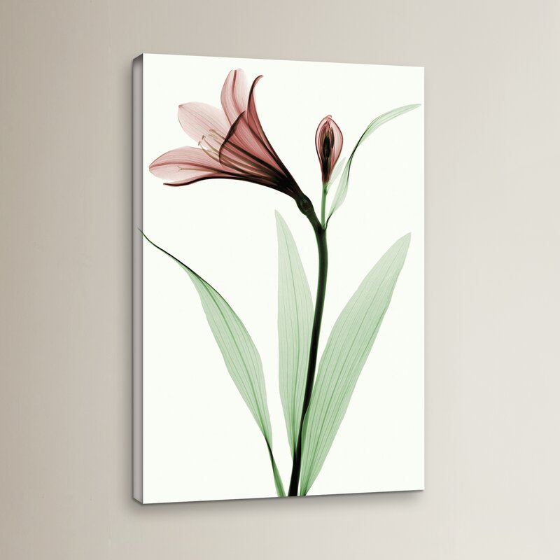Ebern Designs Lily I Graphic Art On Wrapped Canvas Wayfair