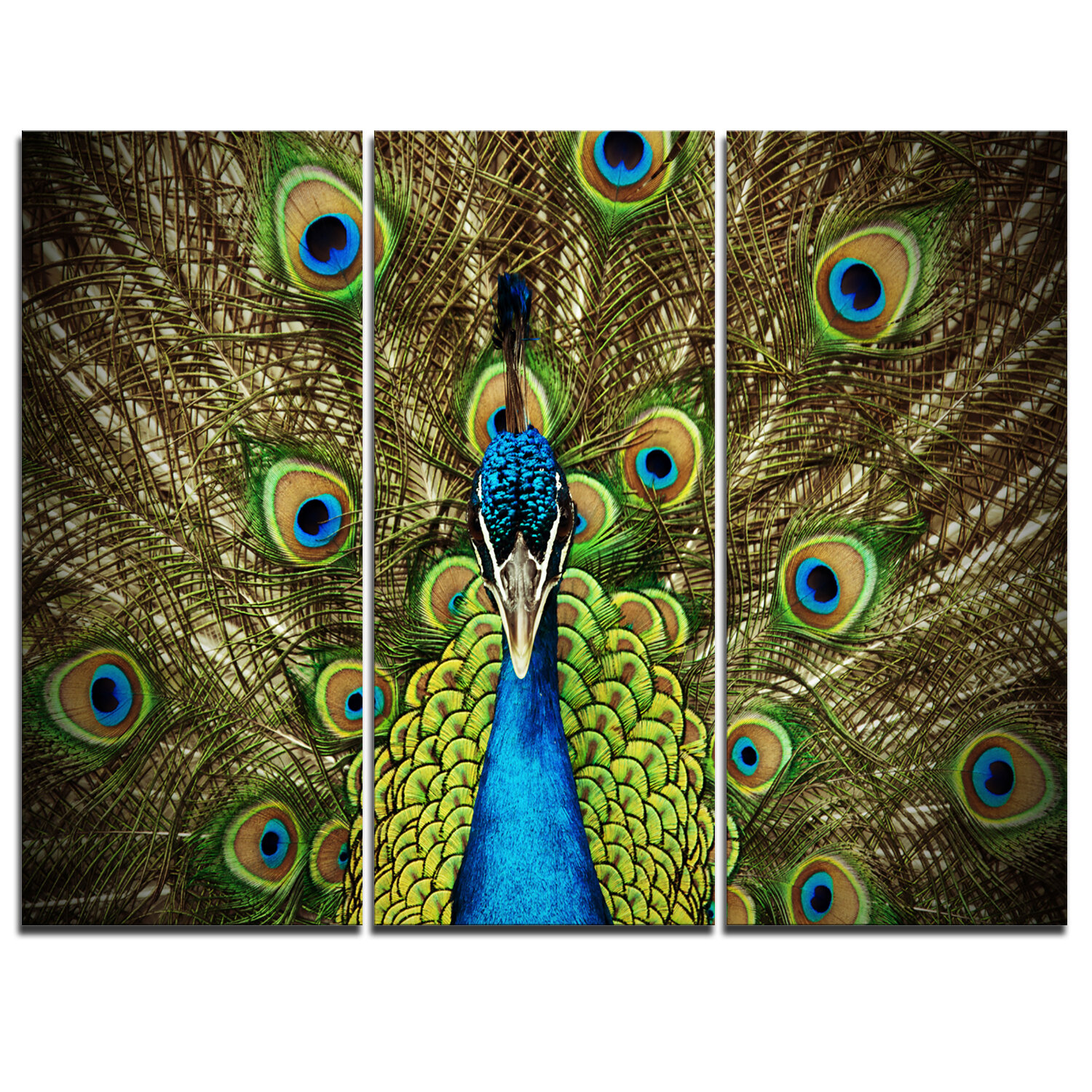 Landscape Peacock Canvas Art You Ll Love In 2021 Wayfair