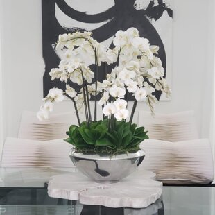 Multiple Stems of Phalaenopsis Orchids Centerpiece in Planter