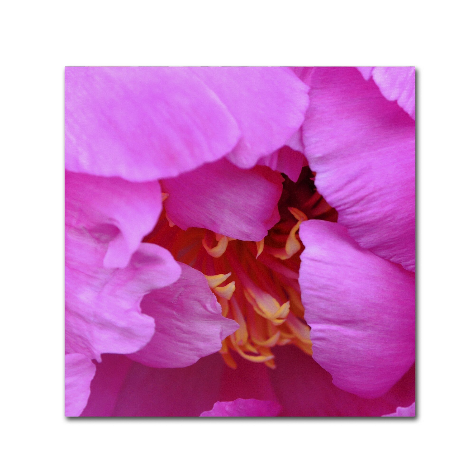 Ebern Designs Tree Peonie Opening Photographic Print On Wrapped Canvas Wayfair