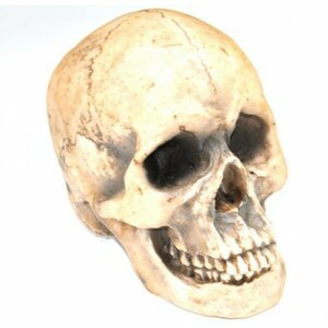 Replica Faux Taxidermy Human Skull Figurine