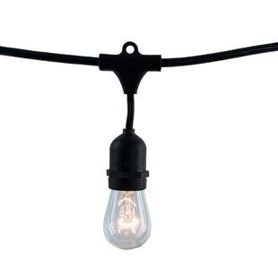 Birch Lane™ 15 Light Globe String Lights