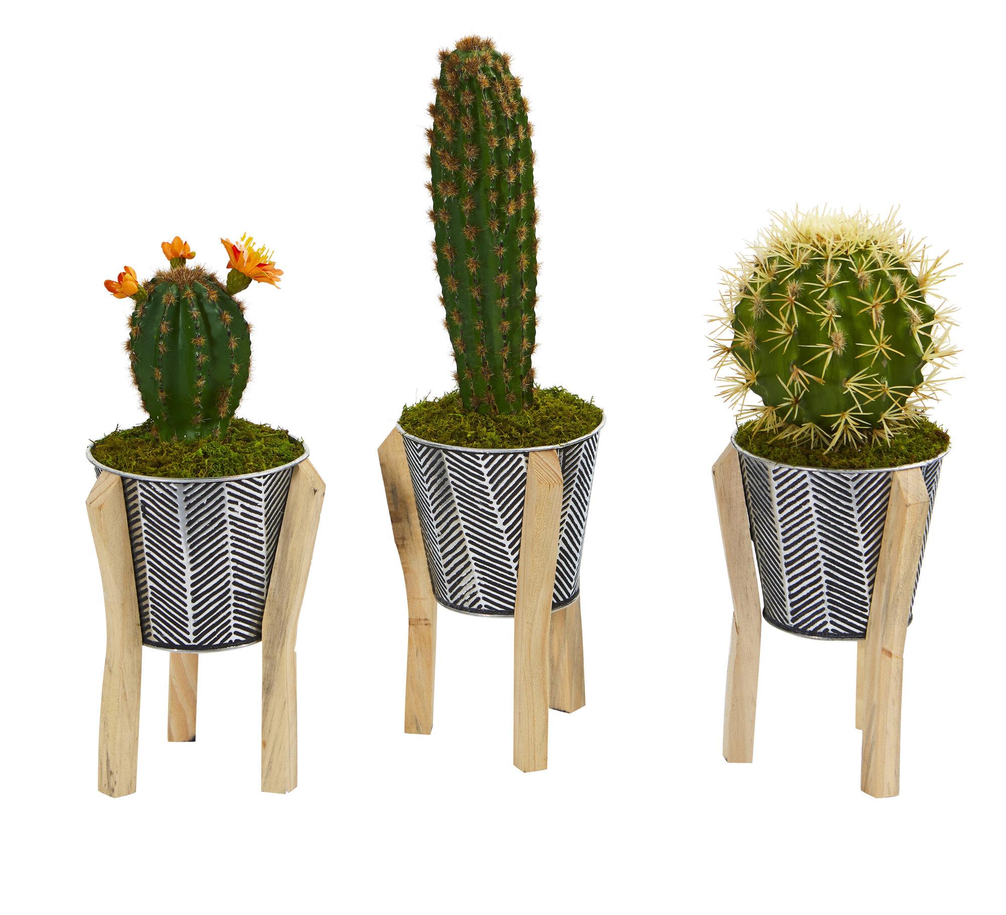 Wrought Studio 3 Piece 7 5 Artificial Cactus Plant In Planter Set Wayfair