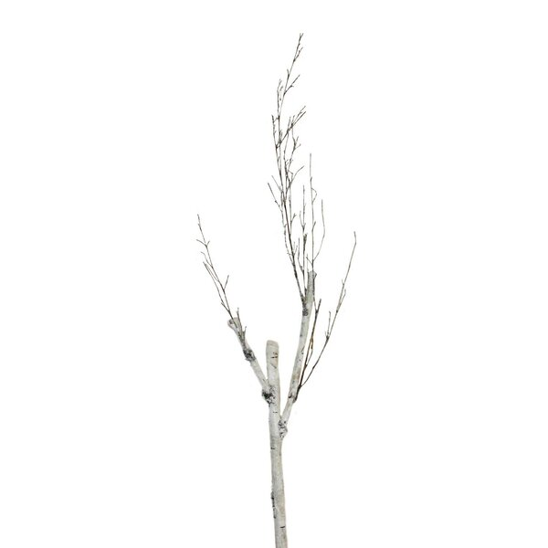 Decorative Birch Branches Wayfair
