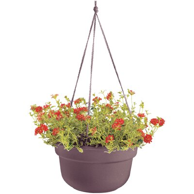 Leadore Self-Watering Vinyl Hanging Planter August Grove Color: Exotica, Size: 6 H x 10.38 W x 10.38 D