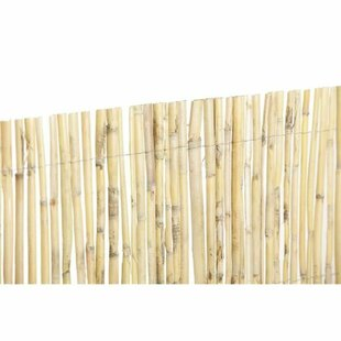 Elaina Catral Cane Reed Split By Beachcrest Home