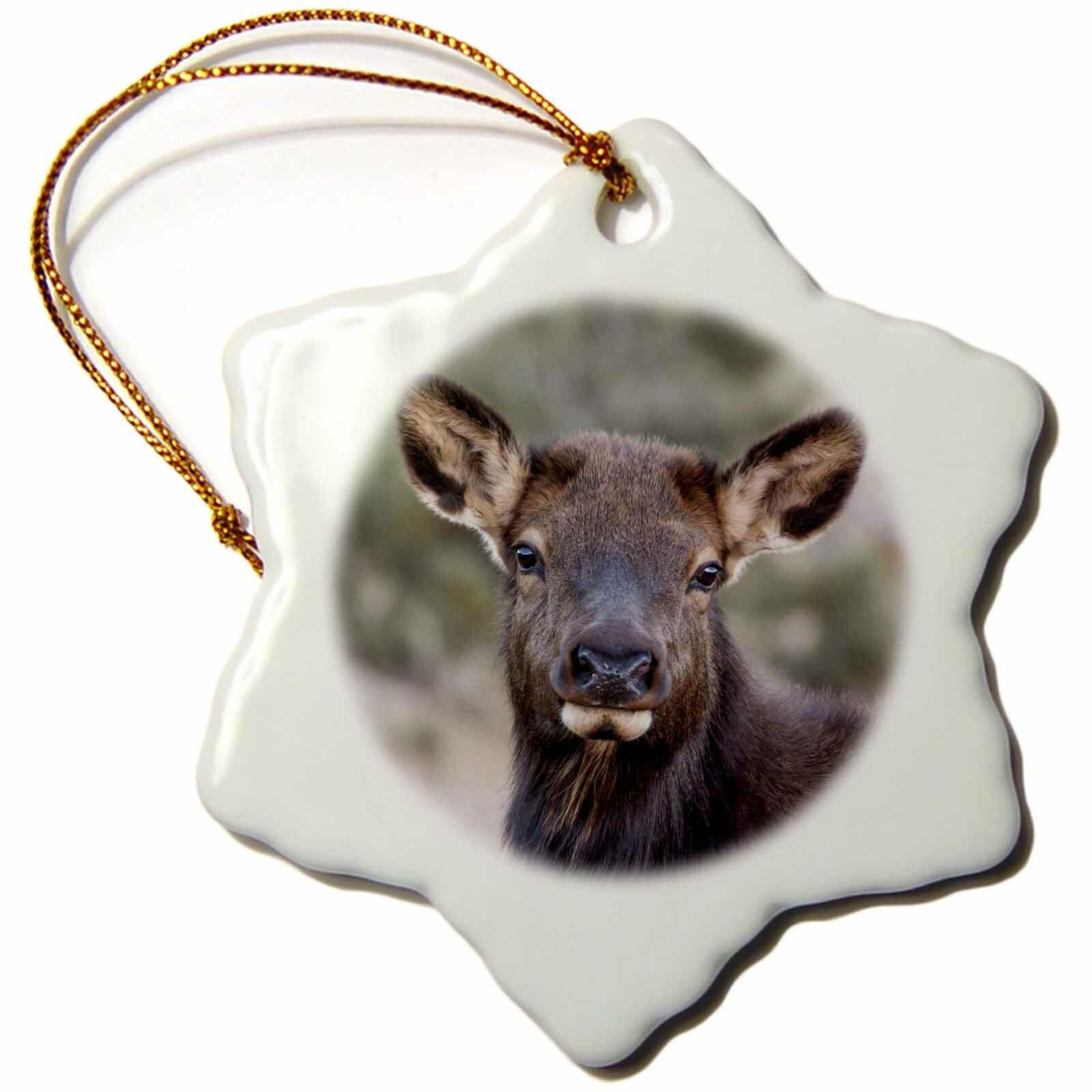 The Holiday Aisle Usa Colorado Estes Park Rocky Mountain Np Cow Elk Or Wapiti Snowflake Holiday Shaped Ornament Wayfair