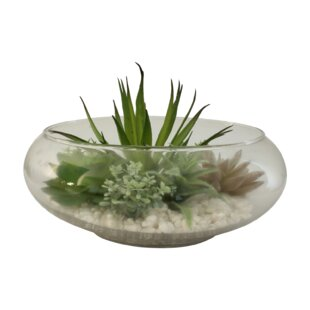 Glass Bowl Desktop Succulent in Decorative Vase by Bay Isle Home