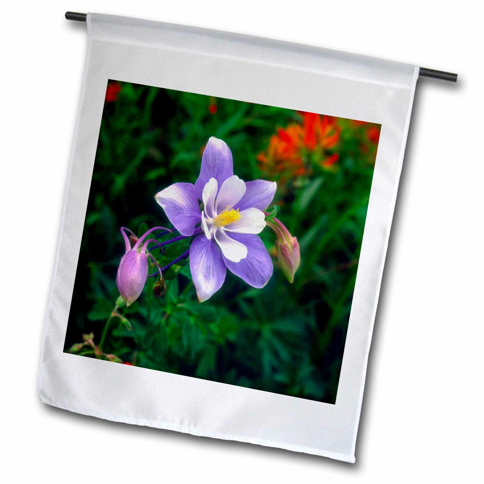 3drose Columbine Flower Yankee Boy Basin Rocky Mountains