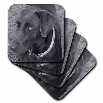 3dRose Black Kitten on The Back of The Couch-Ceramic Tile Coasters CST/_22416/_3 Set of 4