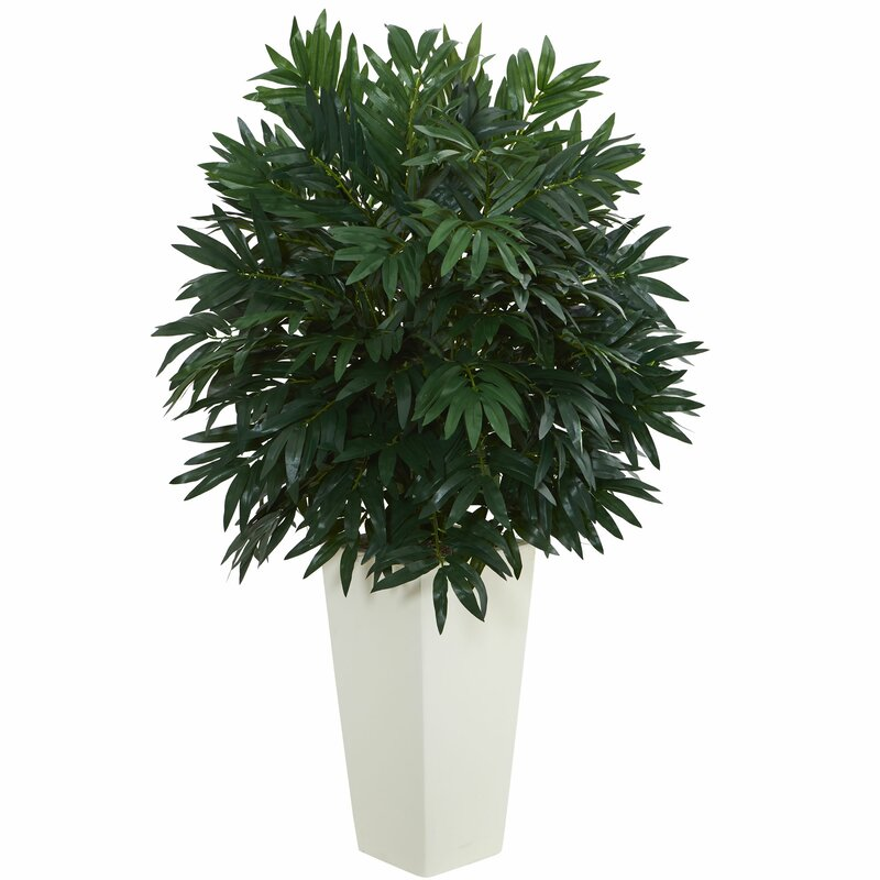 Bloomsbury Market Double Bamboo Palm Plant In Tower Vase Wayfair