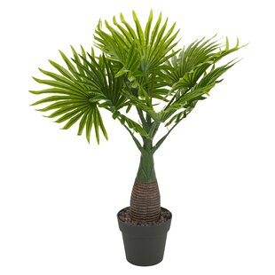 Palm Plant In Pot By Bay Isle Home