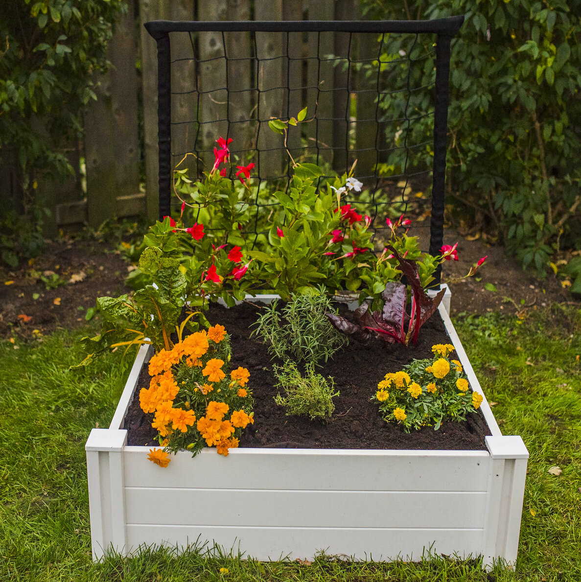 Gracie Oaks Woodrow 3 ft x 3 ft Plastic Raised Garden | Wayfair