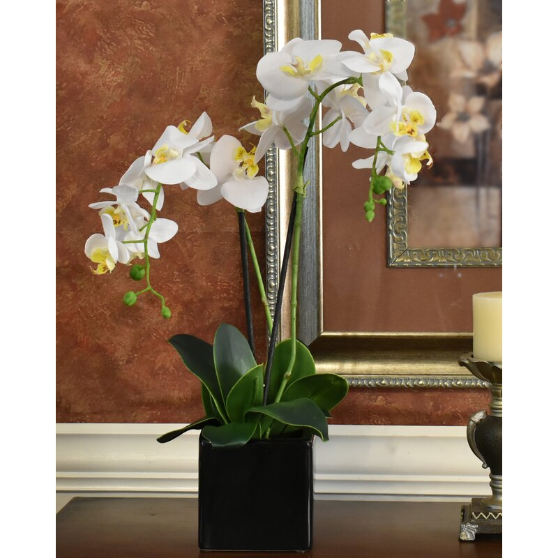floral home decor orchid floral design wayfair.htm darby home co phalaenopsis orchids floral arrangement in  phalaenopsis orchids floral arrangement