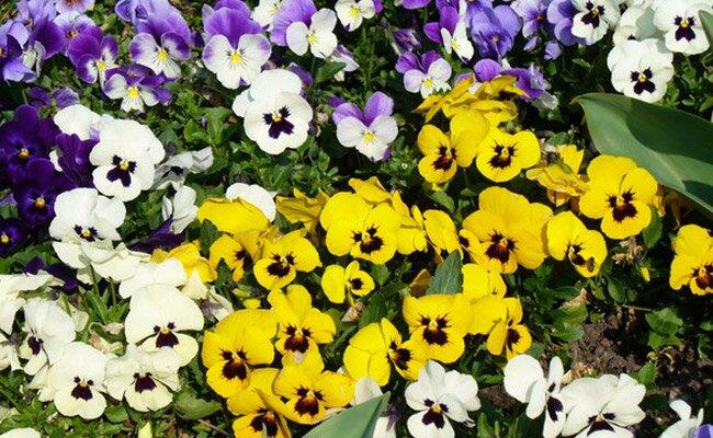Spring flowers to plant now wayfair photo sara downey robinson mightylinksfo