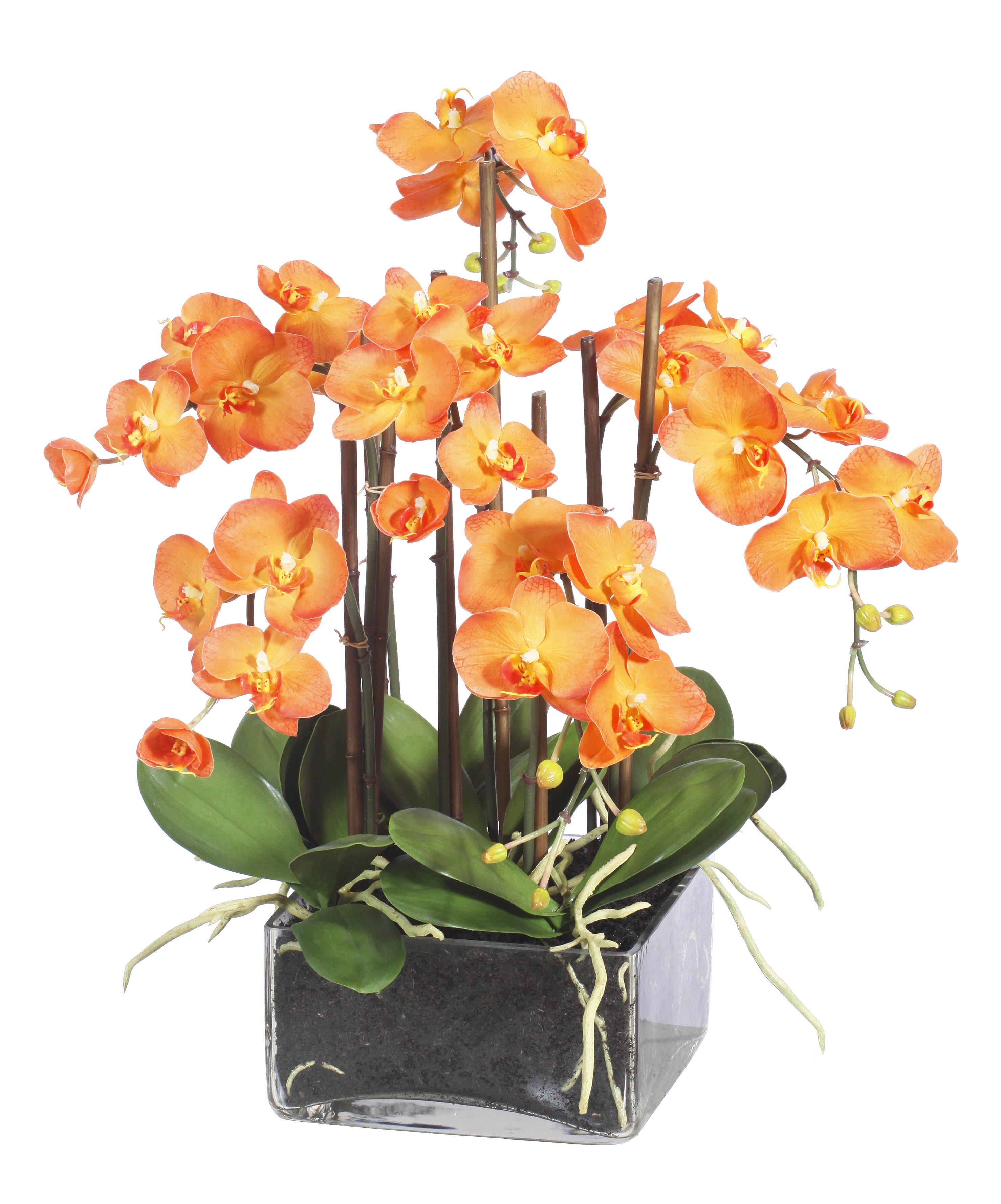 Winward Home Orchids Floral Arrangement In Vase Perigold