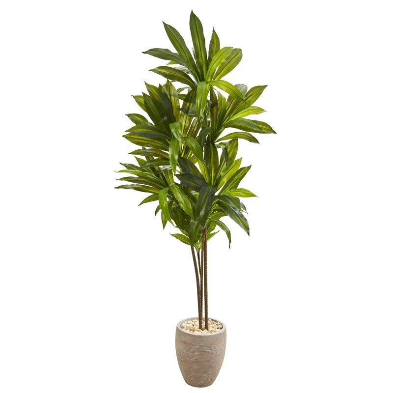 Winston Porter 68 Artificial Dracaena Tree In Planter Wayfair