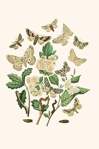 Buyenlarge European Butterflies And Moths By W F Kirby Graphic Art Print Wayfair