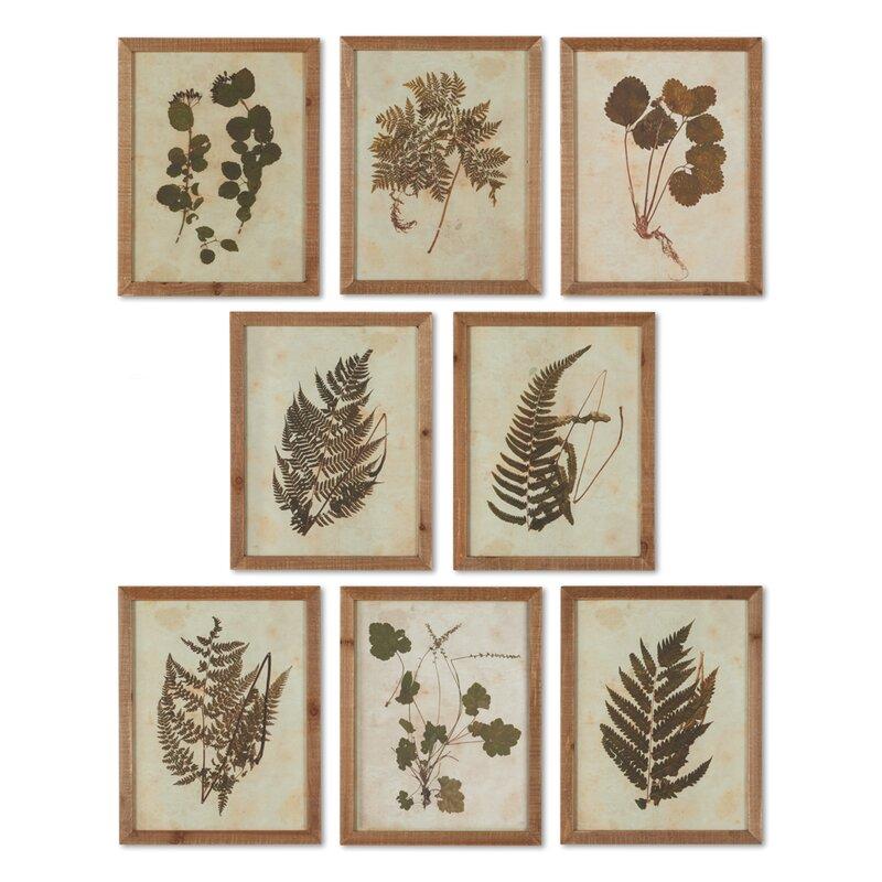 Botanical Specimen 8 Piece Framed Graphic Art Set