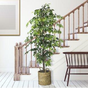 Fake Ficus Tree Wayfair