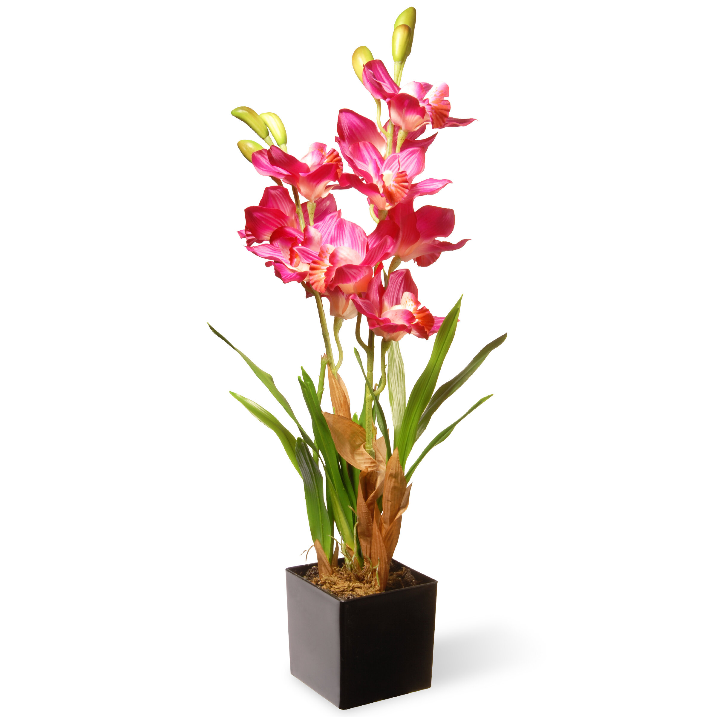National Tree Co Spring Orchid Flowers In Pot Reviews Wayfair