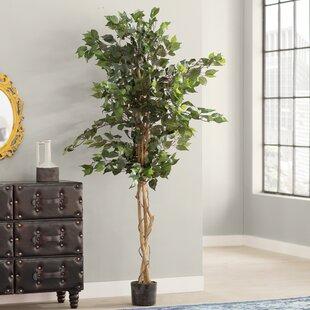 Artificial trees youll love wayfair ficus silk tree in pot mightylinksfo