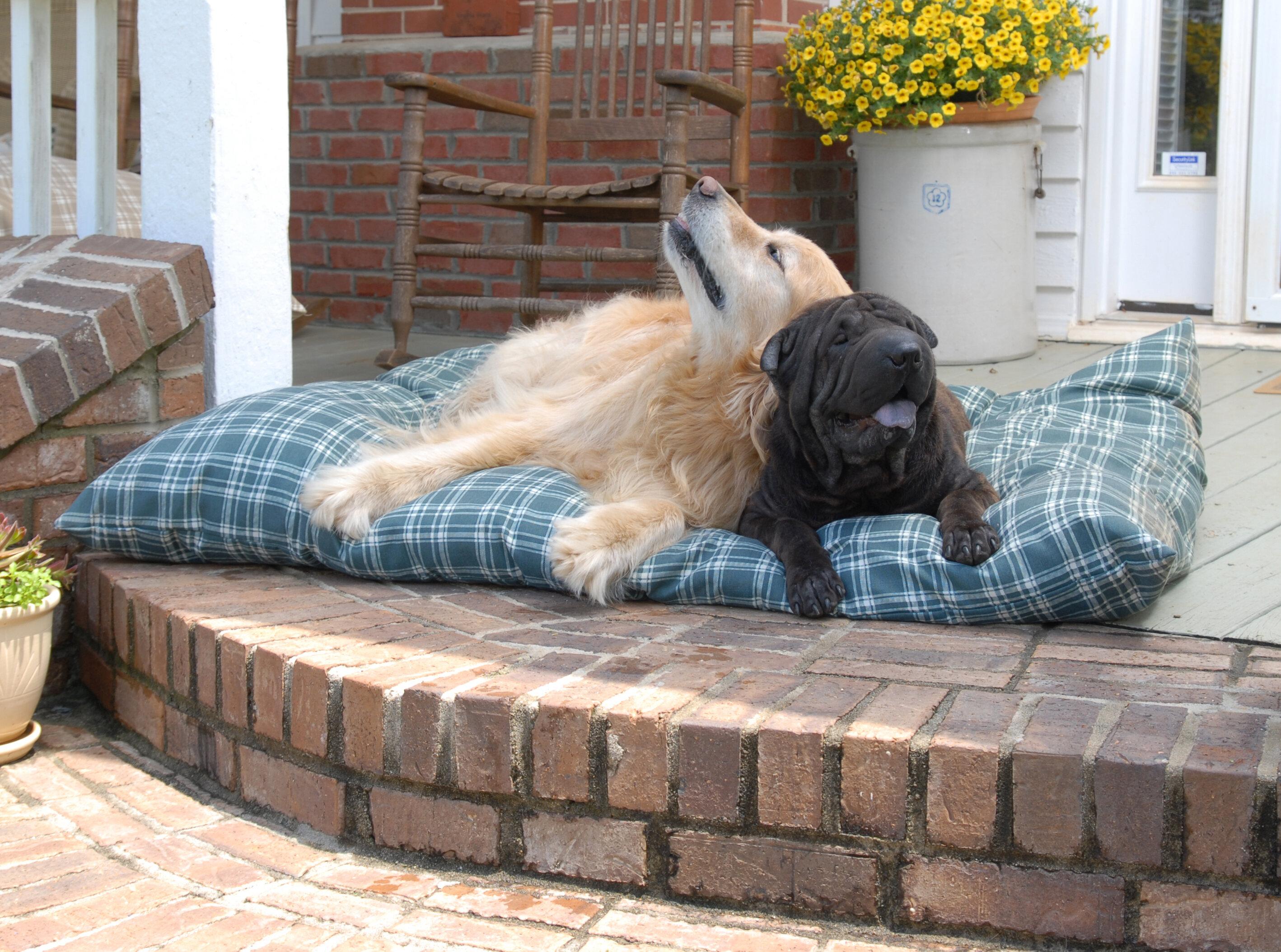 Large Carolina Pet Company Dog Beds You Ll Love In 2021 Wayfair