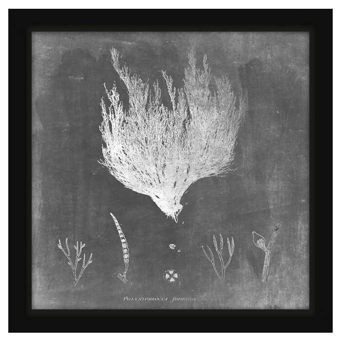 Ptm Mysterious Sea Iv Framed Graphic Art Wayfair