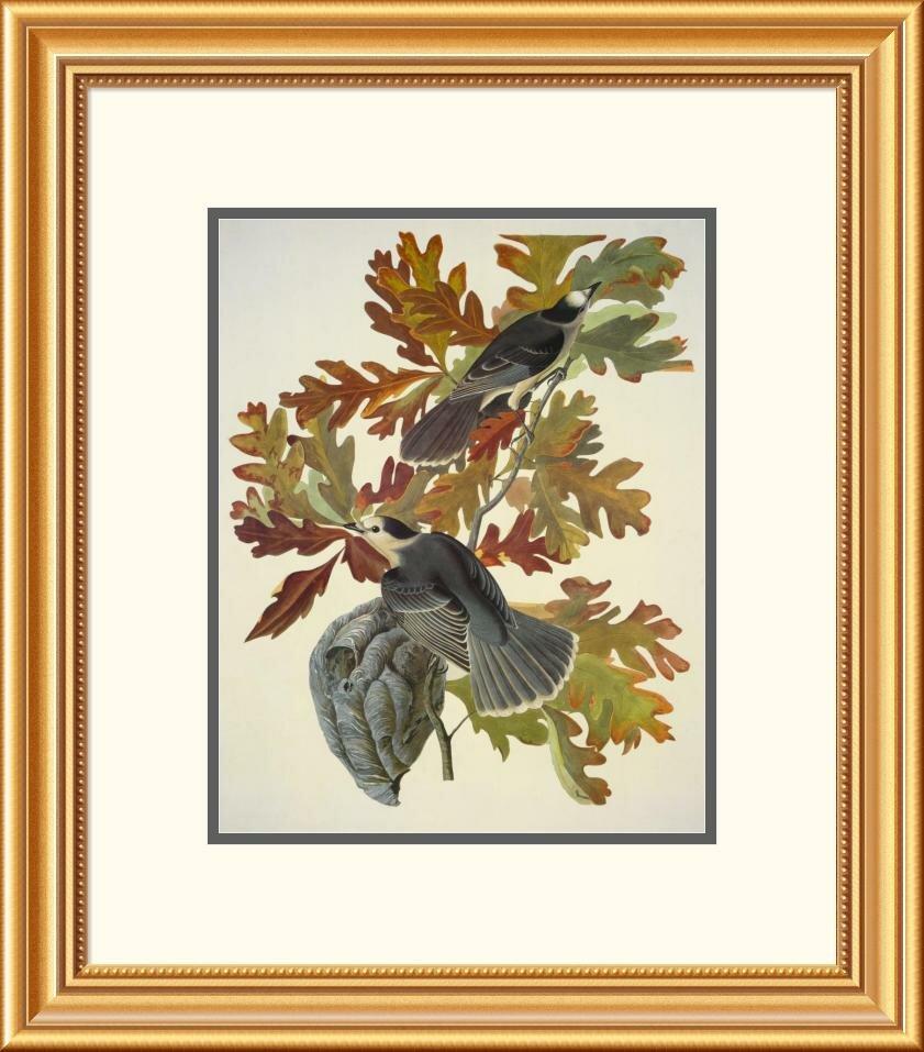 Global Gallery Canada Jay By John James Audubon Framed