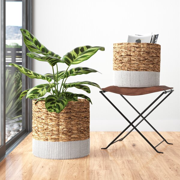 Modern Contemporary Banana Leaf Chairs Allmodern