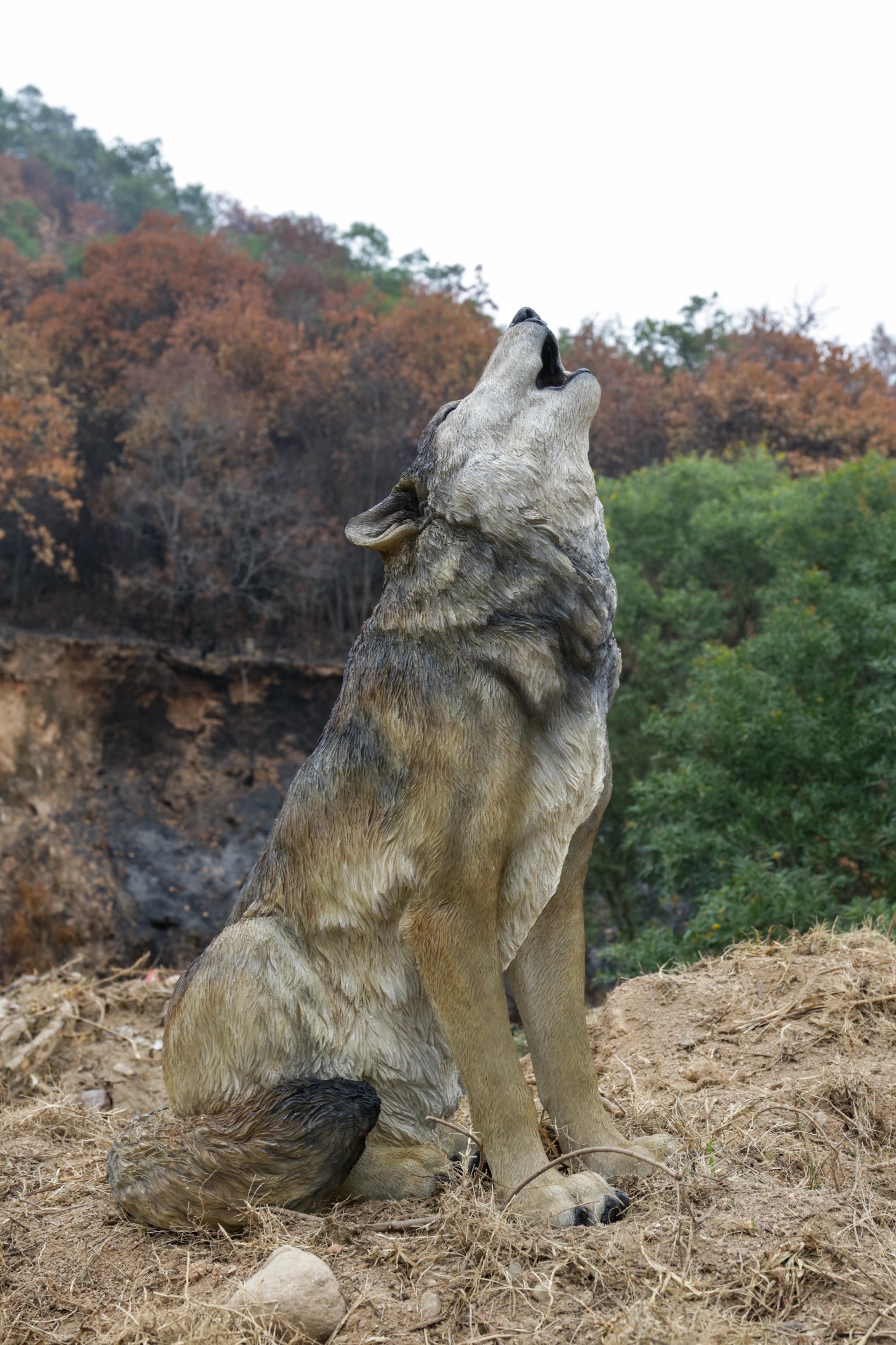 Hi Line Gift Ltd Large Wolf Statue