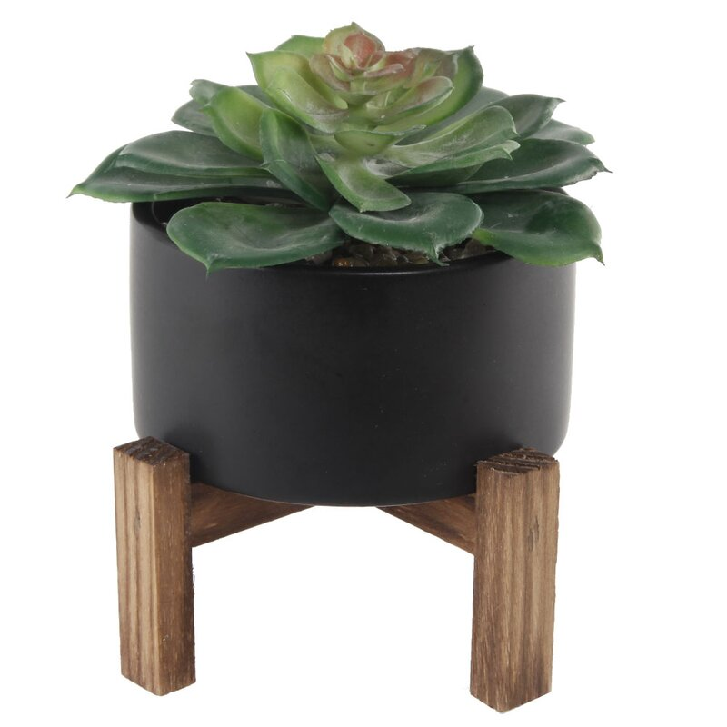 Turn on the Brights  Floor Succulent Plant in Pot