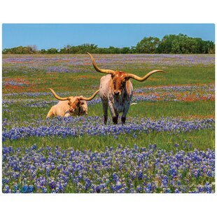 Bluebonnets & Longhorns by Judy Valentine 12
