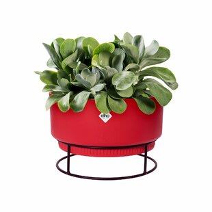 Plastic Plant Pot Image