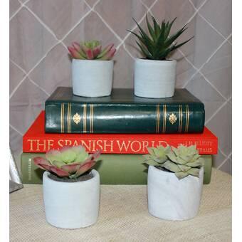4 Piece Desktop Succulent Plant In Pot Set Reviews Joss Main