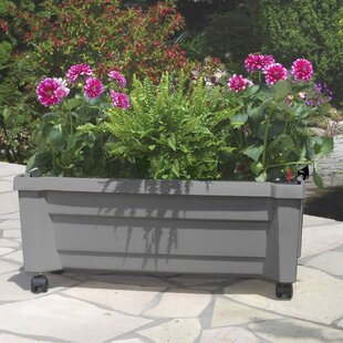 Calypso Plastic Self-Watering Planter Box By Sol 72 Outdoor