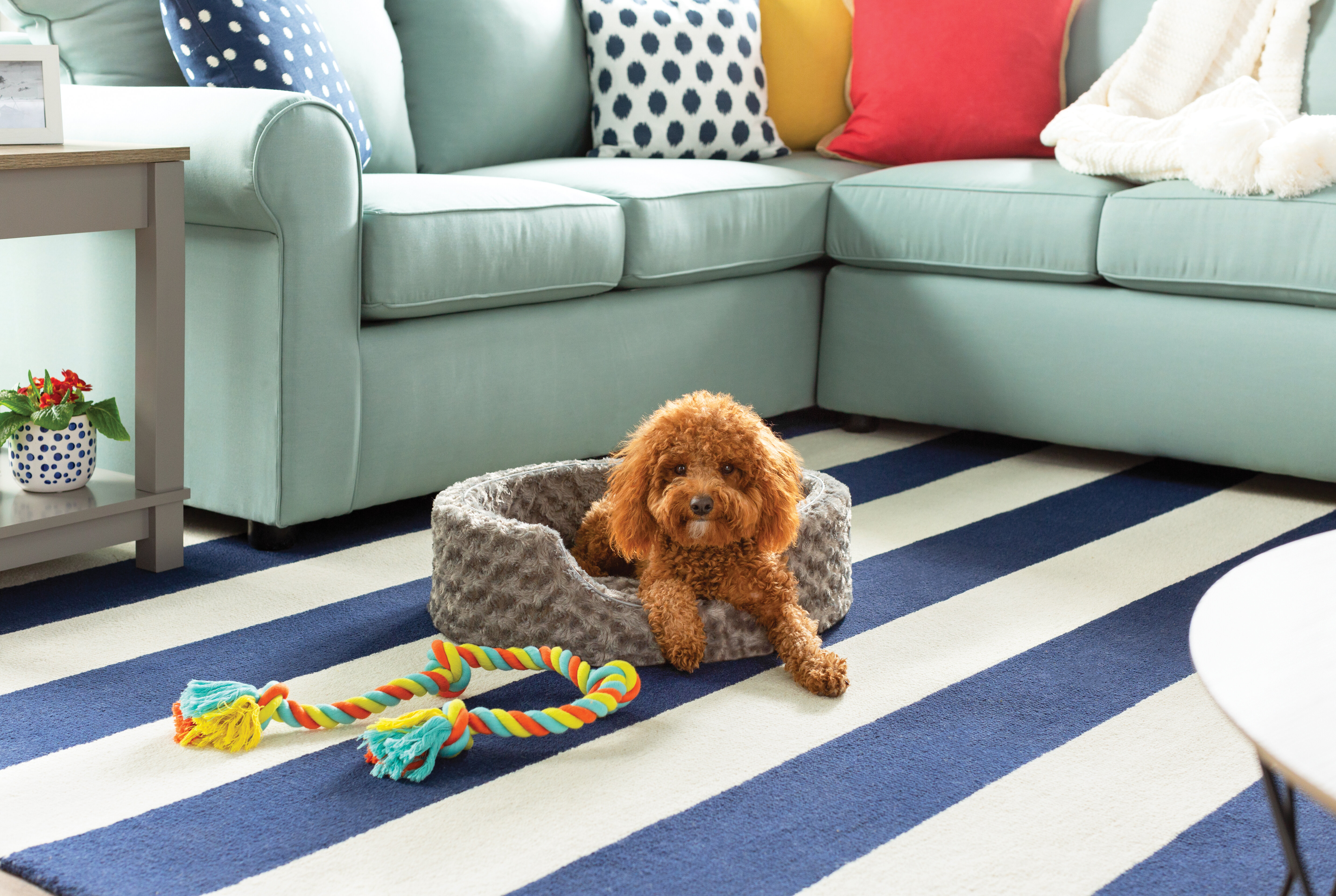 Extra Large Dog Beds You'll Love in 2019 | Wayfair