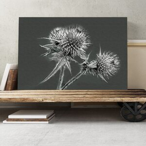 Thistle Flower Photographic Print on Canvas