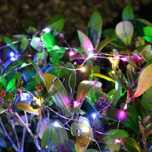 40 Light LED Fairy Event Fairy Light By Sol 72 Outdoor