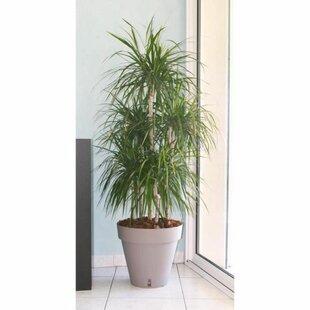 Bannan Plastic Plant Pot Image