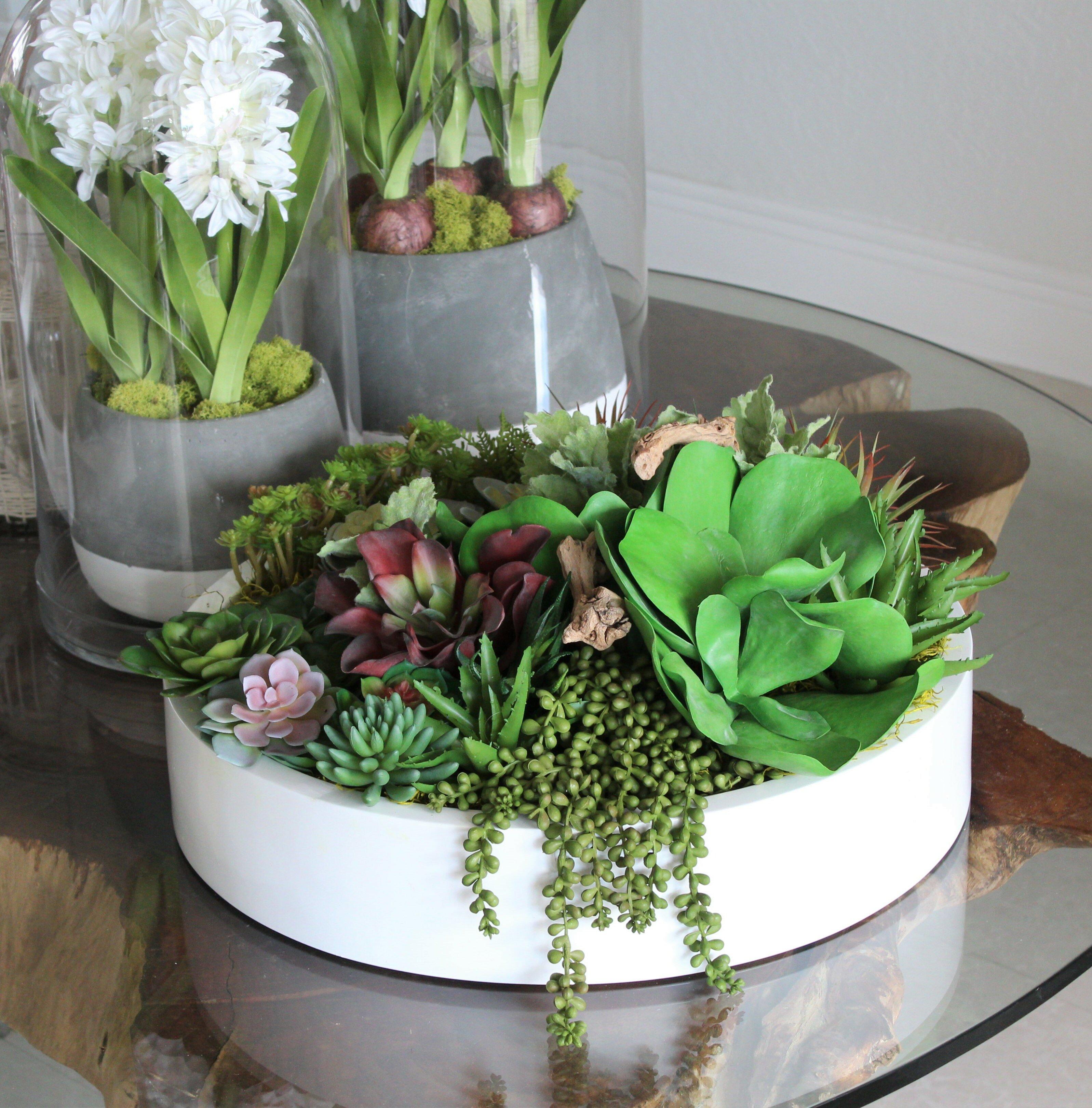 Primrue Max Bowl Succulents Cactus And Driftwood Mixed Centerpiece Wayfair