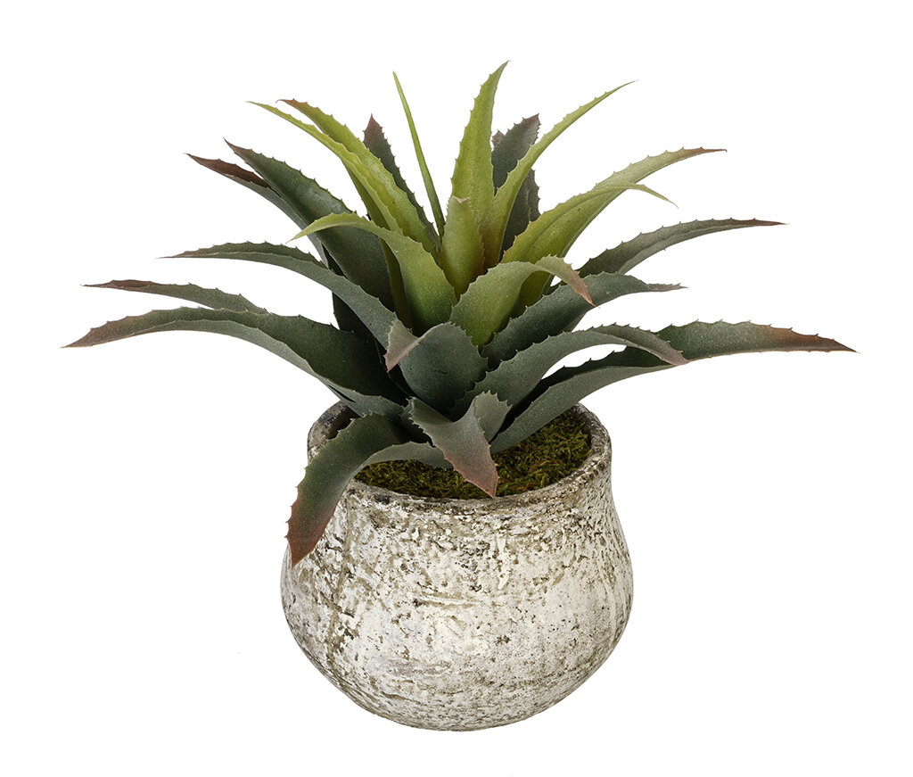 House Of Silk Flowers Artificial Star Succulent Desk Top Plant In