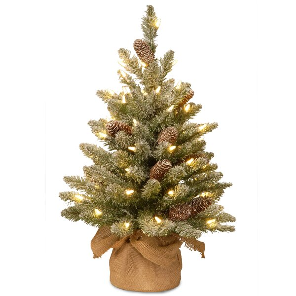 White Fir Christmas Tree: The Holiday Aisle Snowy Concolor Fir 2' Green Artificial